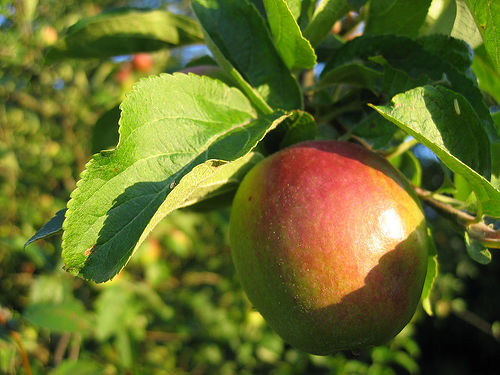 Apple oh grimy! The mighty Fuji apple of my dreams.